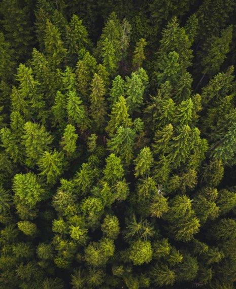 Översiktsbild över gröna träd